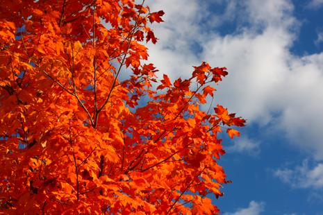 orangefall.jpg