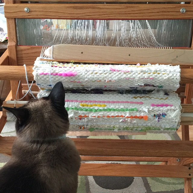 Justine was scoping out a new possible place to nap. I told her that this particular option is off the table.  #weaving #weaver #cats #justinethecat #weavingloom #loom #adventuresofareluctantcatlady