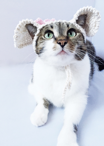 CraftSanty Podcast Episode 159: A Cat Lady Special Edition featuring Sara Thomas, author of 'Cats in Hats: 30 Knit and Crochet Patterns for your Kitty'